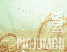 PicJumbo_Thumb_230x180